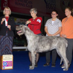 New GCH Molly, 2 years 3 months, Eukanuba Pre Show (Tuesday) BOS