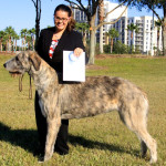 Olwen 1st place Open Bitches at Eukanuba