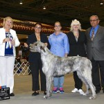 New Champion St. Pete 21 months with Owners: Amanda & Rebecca Torres and Breeders: Carolyn & Bill Avoglia