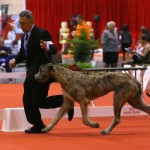 Macarena at Royal Canin 2016 with James